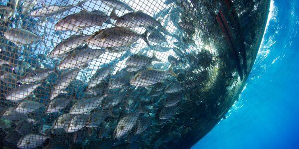 fishfarming